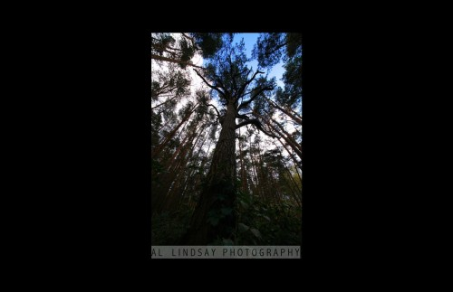 Horsell Common, England # 4 (SQUARE) 0513